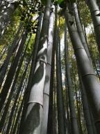 Top 5 Things to Do in Arashiyama