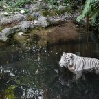 Visiting the Singapore Zoo